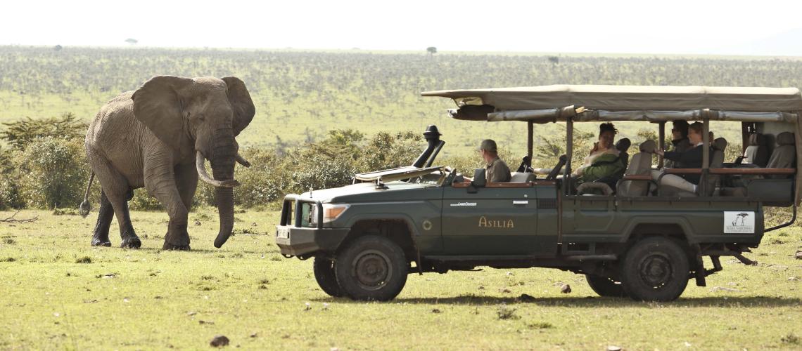 rovdyr i afrika